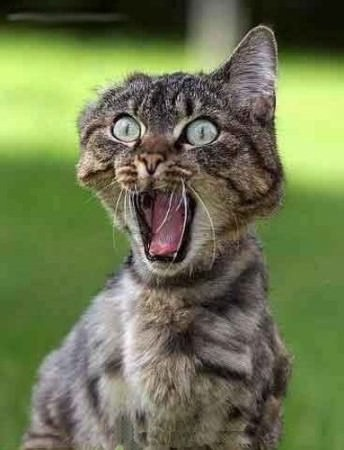 Ce n'est pas mon anniversaire... Medium_chat-peur-humour-animal