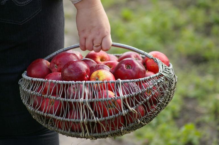 mono diete pomme